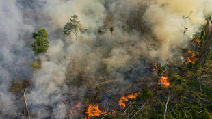 Flames consume a section of the Amazon in the state of Para on August 15, 2020.