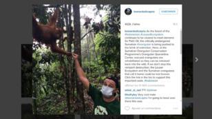 Leonardo DiCaprio en visite dans une réserve pour orangs-outans en Indonésie.