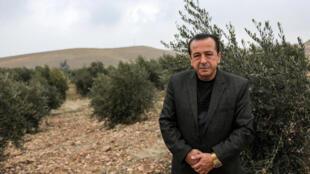 Suleiman Sheikho, dans son champ d'oliviers à Arbil dans le Kurdistan irakien, le 22 février 2020