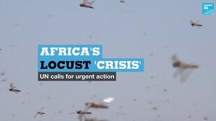 East Africa is in the midst of one of the largest locust outbreaks the region has seen in decades.