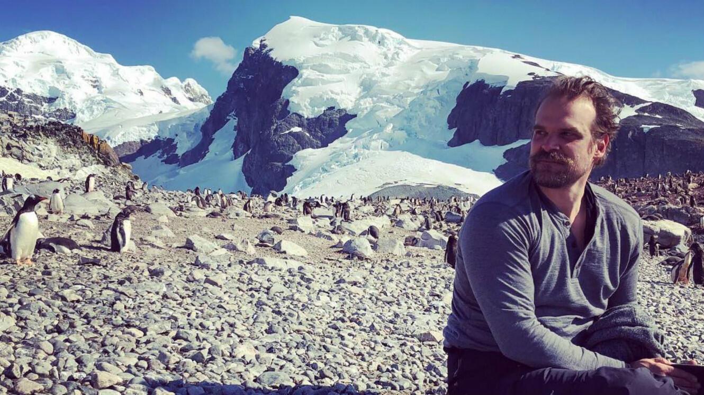 """L'acteur de """"Stranger Things"""" David Harbour au milieu des manchots en Antarctique pour Greenpeace."""