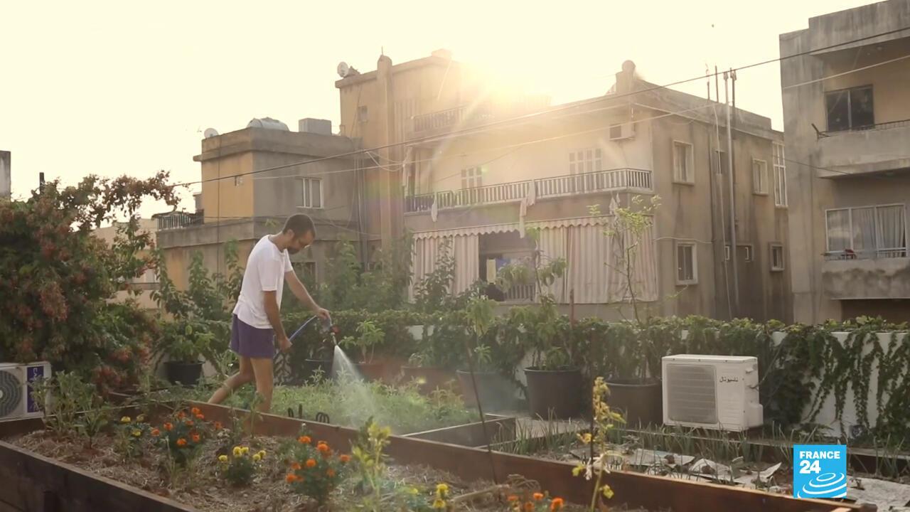 Espinacas y tomateras en vez de macetas de flores ahora se ven en los balcones de las casas libanesas ante la disparada de precios de los alimentos.