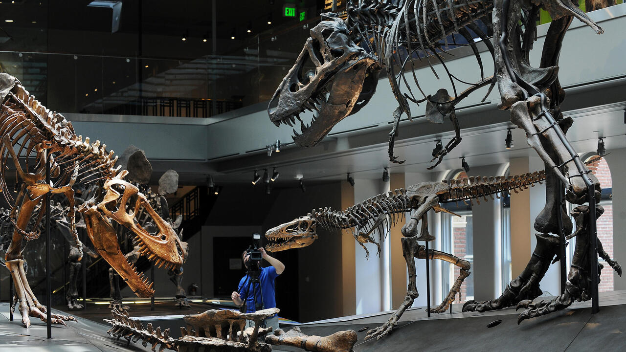 Teenage T-Rexes edged out smaller dinosaur species, says study - France 24