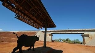 For example, railways run through Tsavo East (seen in 2016) and Tsavo West national parks in Kenya, home to the endangered eastern black rhinoceros and lion populations famous for their strange lack of manes