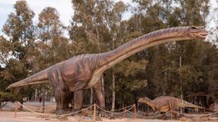 Image d'illustration d'un Argentinosaurus, précédent plus grand dinosaure avant la découverte du Patagotitan Mayorum.