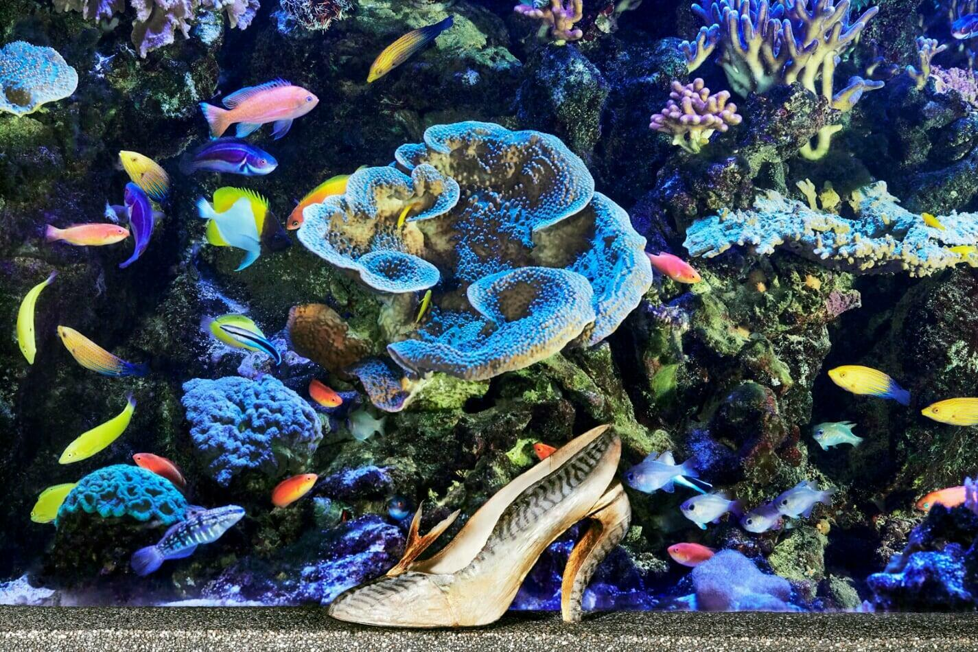 """The """"Maquereau"""" shoe, designed by Louboutin in 1987, in front of Paris's Tropical Aquarium"""