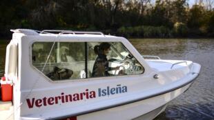 La veterinaria argentina Leila Peluso navega sobre el río Sarmiento en el Delta de Paraná, provincia de Buenos Aires, para brindar asistencia a mascotas y animales de granja, el 24 de julio de 2020