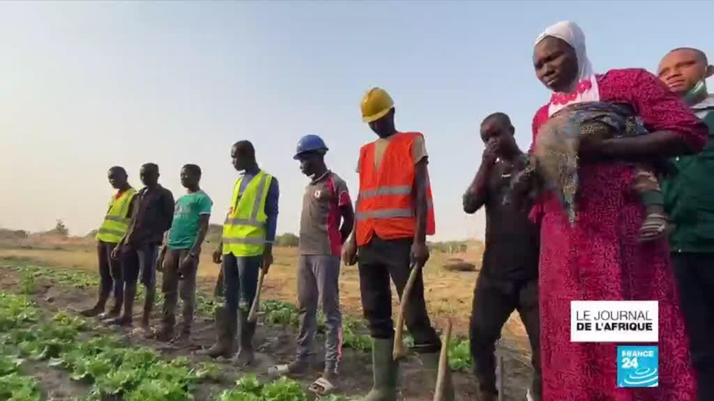 2021-03-24 22:51 Agriculture au Togo : des fermes-écoles pour apprendre le métier sans pesticide