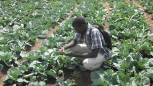 Un agriculteur utilisant le service Mlouma au Sénégal.