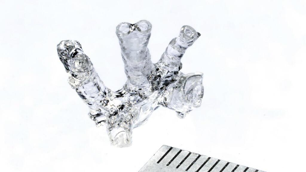 Modèle creux d'artère pulmonaire de souris imprimée en 3D.