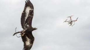 La base aérienne de Mont-de-Marsan possède quatre aigles royaux pour la lutte anti-drone.
