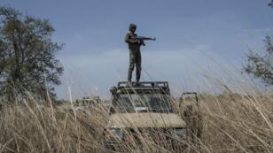 Un garde forestier monte la garde lors d'un exercice d'élagage au parc national de la Pendjari où deux touristes Français ont été enlevés, le 1er mai 2019.