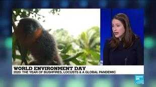2020-06-05 17:12 2020 World environment day marked by bushfires, locusts, global pandemic