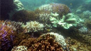 En Nouvelle-Calédonie, des récifs coralliens sont préservés dans la plus importante aire maritime protégée de France.