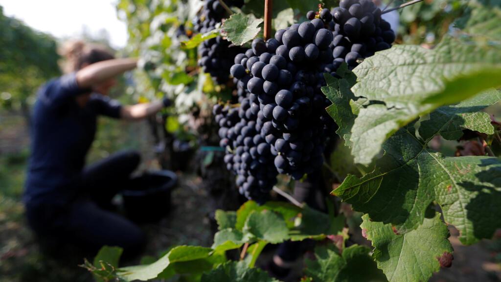 Jean Castex annonce un plan d'aide revu à la hausse pour sauver le vin français