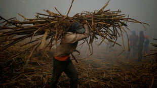 Un trabajador transporta caña de azúcar cortada para cargar un camión en una granja en Apastepeque, El Salvador, el 25 de enero de 2019.