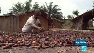 En foco cacao Costa de Marfil