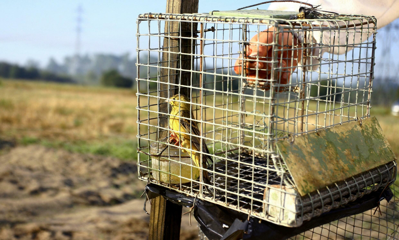 bird-hunting