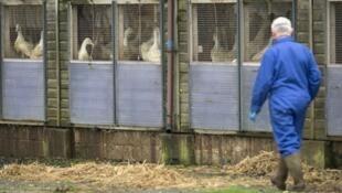 أعلنت وزارة الزراعة الفرنسية أنه تم رصد 12 بؤرة لأنفلونزا الطيور في فرنسا حتى الآن