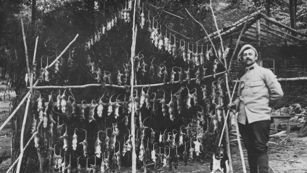 Un soldat pose avec des douzaines de rats capturés dans les tranchées de l'Argonne