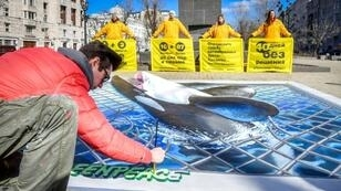 Last month Greenpeace activists produced an image of an orca in Moscow in protest against keeping orcas and beluga whales crammed into small enclosures in the Far Eastern town of Nakhodka