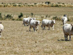 France asks EU to bring forward aid for drought-hit farmers