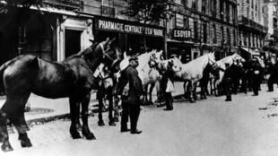 Des chevaux réquisitionnés lors de la Première Guerre mondiale.