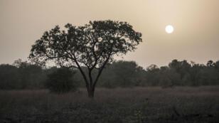 La Pendjari, avec ses 4700km2, s'étend sur le Bénin, le Burkina Faso et le Niger.