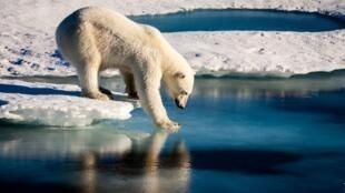 El Ártico se está calentando de dos a tres veces más rápido que otras partes del mundo.