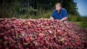 Australian growers such as Braetop Berries strawberry farmer Aidan Young are having to destroy crops after a nationwide scare over strawberries pierced with needles