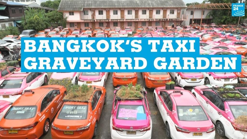 Bangkok's taxi graveyard garden: Covid-hit cabbies turn to growing vegetables