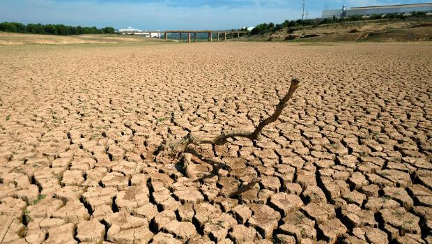 Los restos de un árbol muerto se representan en el depósito de agua María Cristina, casi vacío, durante una grave sequía cerca de Castellón, España, el 14 de septiembre de 2018.