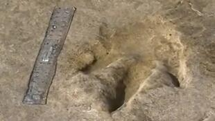 آثار أقدام ديناصورات تعود إلى ما قبل 85 مليون سنة بنواحي مدينة أكادير في المغرب