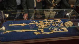 Le squelette de Little Foot exposé à l'Université de Witwatersrand de Johannesbourg, le 6 décembre 2017.