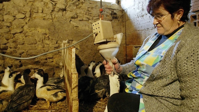 A French farmer force-feeding a duck