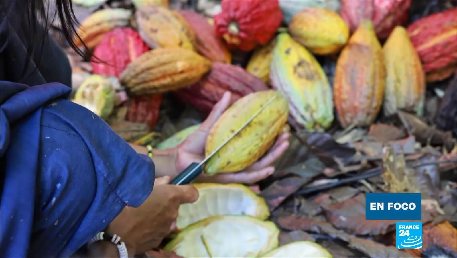 en foco - cacao Perú