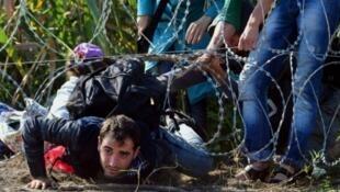مهاجرون يعبرون الحدود خلسة من صربيا إلى المجر