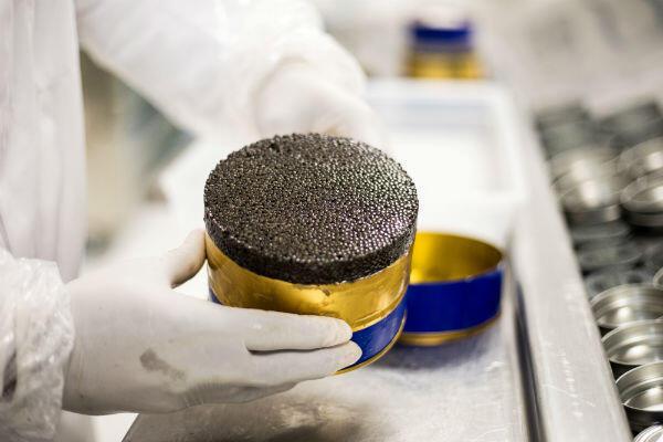 """""""Un bon caviar présente un effet miroir à l'ouverture de sa boîte, il roule dans la bouche et exhale une odeur de beurre frais."""""""