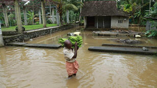 رجل يجتاز الفيضان حاملا ثمار الموز في كيرالا جنوب الهند.