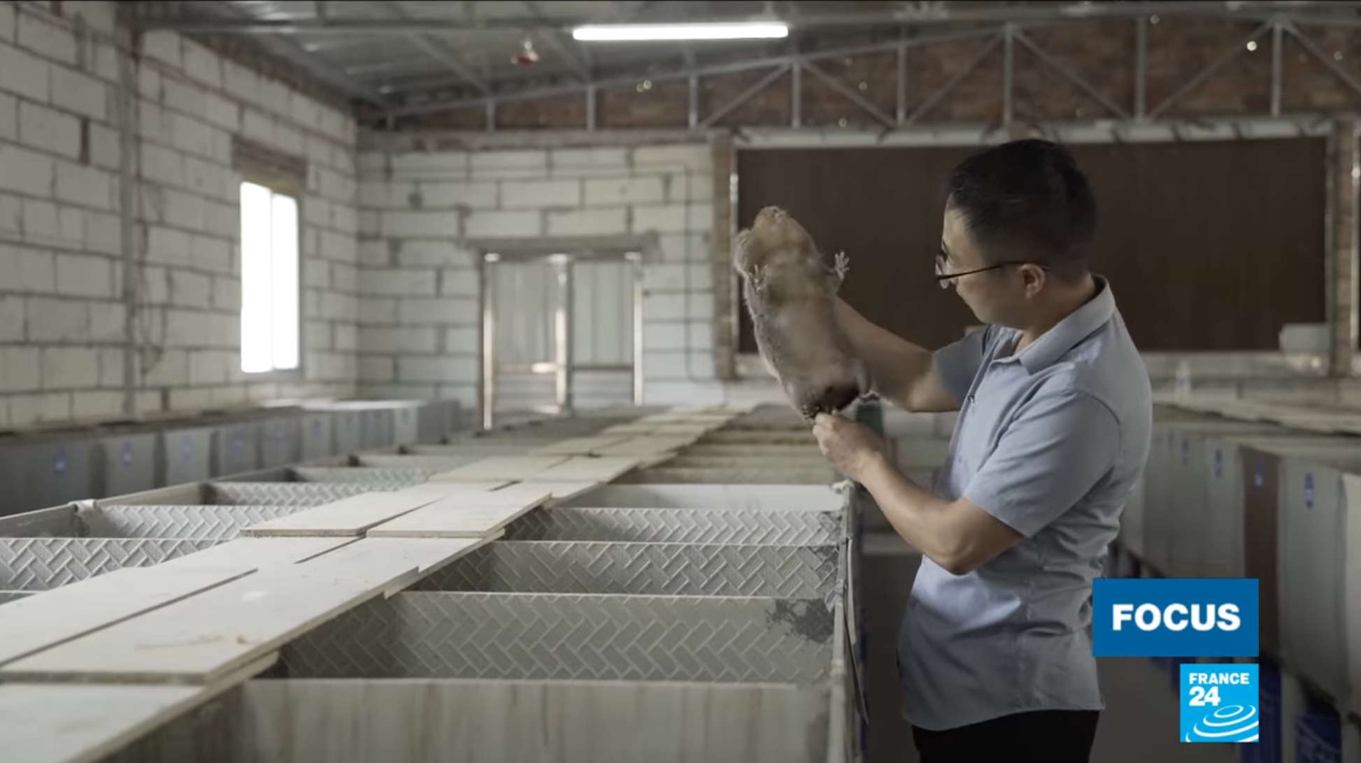 One bamboo rat breeder in China laments the end to the sale of wild animals.