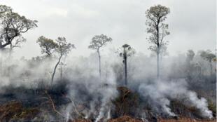"""Au cœur des critiques des organisations écologistes, le """"chaqueo"""", pratique de la culture sur brûlis largement répandue."""