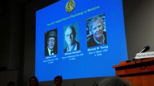 Jeffrey Hall, Michael Rosbash y Michael W. Young en pantalla durante la premiación en Estocolmo.