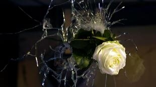 A rose is pictured in a bullet hole in a window, on rue de Charonne, in Paris on November 14, 2015, a day after a series of coordinated attacks by gunmen and suicide bombers in and outside Paris.
