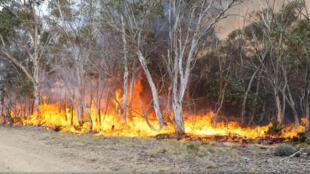 النيران تلتهم أشجار بولاية نيو ساوث ويلز الأسترالية، 9 كانون الثاني/يناير 2020.