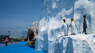 Usually the penguins at Hong Kong's Ocean Park draw large crowds, but it is shut because of the coronavirus pandemic