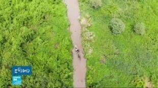 زهرة صفير الماء كابوس الصيادين في كينيا بعد أن غزت بحيرة فيكتوريا.
