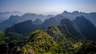 Une forêt birmane.