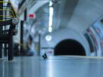 مشاحنة بين فأرين على رصيف مترو بلندن تحصد جائزة أفضل صورة سنوية للحيوانات!