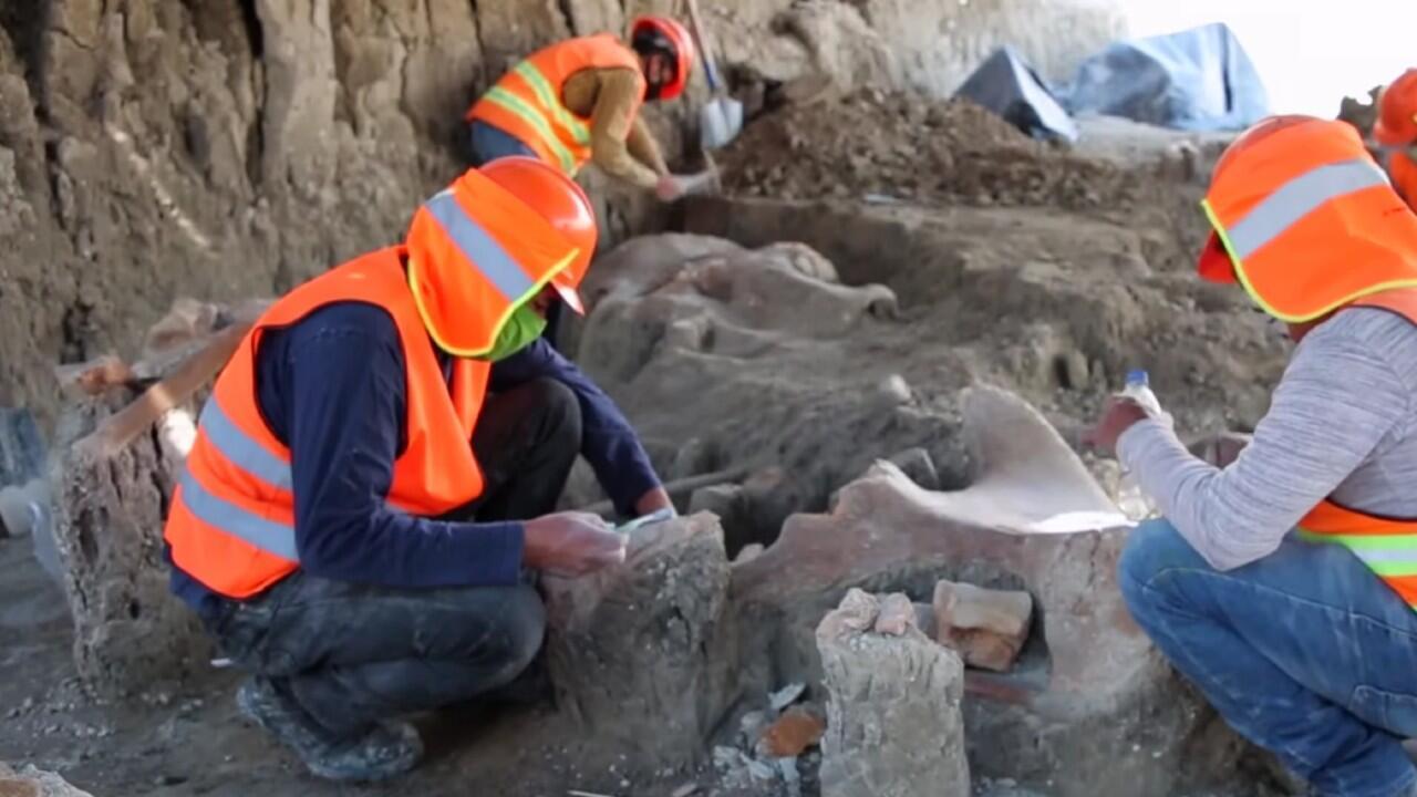 Trabajadores recuperan huesos de mamut encontrados en la construcción del Aeropuerto Internacional de México en la capital del país.