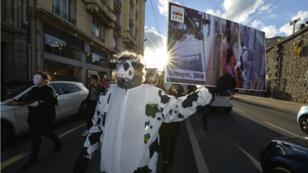 Un militant manifeste contre le traitement infligé aux animaux à l'abattoir de Limoges, le 26 novembre 2016.
